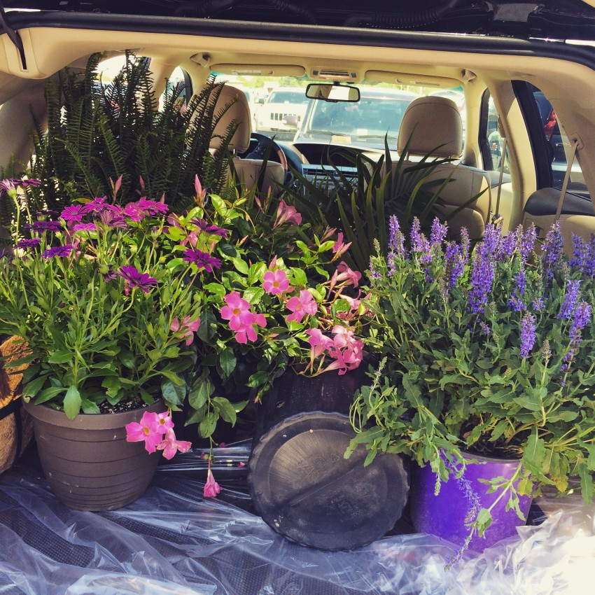 Part Designer, Part Landscaper  (& phew, they fit in the car!)